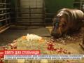 Бегемотиху Степаниду в день рождения засыпали лепестками роз