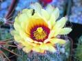 Колючее чудо: макросъемка редких видов кактусов