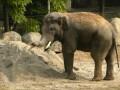 В Киеве сняли на видео играющего в песочнице слона