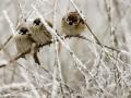 Ночью 3 января в Украине похолодает до -23° С