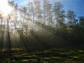 Погода в Украине на 16 февраля: Тепло и солнечно