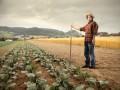 Государство начнет поддерживать аграрный сектор уже весной