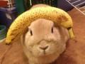 Кролик Винни - самое терпеливое животное в мире (ФОТО)