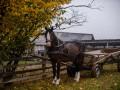 Впервые в Украине экзит-пол проведут в самых отдаленных селах