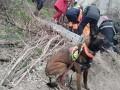 В Днепре пес спас женщину, которая пропала без вести