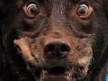 Вспышка бешенства в Полтаве: выросло количество пострадавших от укусов собаки