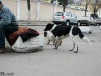 В Киеве могут запретить попрошайничество с животными