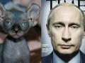 Foreign Policy сделало подборку лысых котов, похожих на Путина