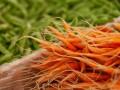 В Украине дорожает морковь