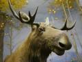 В Киеве на Южном мосту Mercedes насмерть сбил лося