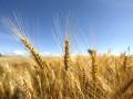 Фискальной службе разрешат проверять крупнейших экспортеров зерна