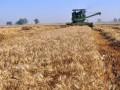 Украинские аграрии отчитались об урожае зерновых и зернобобовых