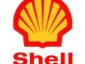 Shell может использовать собак для обнаружения нефтеразливов в Арктике