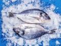 Украина собирается ввозить рыбу из Британии
