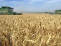 Госстат отчитался об упадке украинского сельского хозяйства