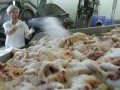 Казахстан ограничил ввоз мяса птицы из Украины