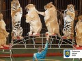 Горсовет Львова предложит Зеленскому запретить эксплуатацию животных