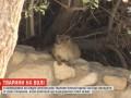 В Израиле животные перестали бояться людей