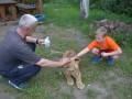 В одной из квартир Запорожья поселился львенок