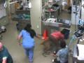 Цена достоинства: пес сбежал из клиники вместе с ветеренаром