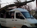 Под Киевом рухнувшее дерево раздавило маршрутку