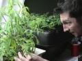 В Уругвае могут отменить легализацию марихуаны