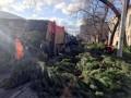 В Одессе торговцы бросили на улицах тысячи непроданных елок