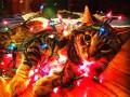 Скоро Новый год: как животные готовятся к праздникам