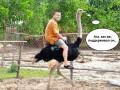 Поддерживатель страусов: соцсети смеются над заявлениями Януковича