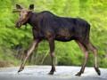 Власти Украины в разы увеличили штрафы за уничтожение животных и вырубку деревьев - Ъ