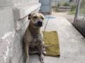 Минюст с аукциона продает собак владельцев-должников
