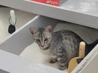 В киевском супермаркете кошка использовала емкость с сахаром вместо туалета - СМИ