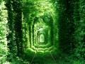 Тоннель любви в Ровно станет платным