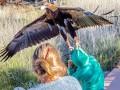 В Австралии орел пытался утащить мальчика