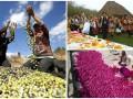 День в фото: гончары с лампами, фермеры с оливками и импровизированная свадьба