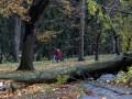 В Чехии из-за непогоды без света остались 140 тысяч домов