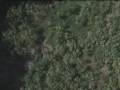 Дрон снял огромную плантацию конопли