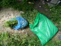 В частном домовладении в Киеве обнаружили плантацию конопли