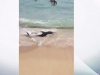 Выбросившаяся на пляж Майорки акула напугала туристов