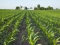 Кабмин одобрил развитие органического производства