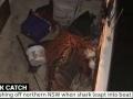В Австралии акула запрыгнула рыбаку прямо в лодку