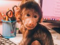 В зоопарке под Запорожьем показали фото месячной обезьянки