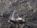 Кит потопил британскую яхту