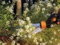 Жительнице США запретили выращивать цветы возле дома