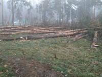 В Киеве возле метро Лесная начали вырубку леса