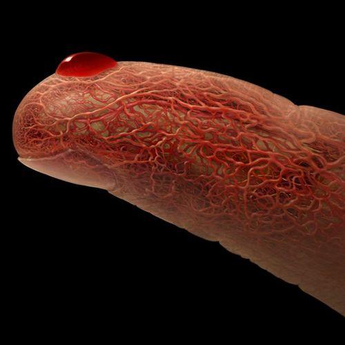 Жуткие и удивительные анатомические фотографии – Александр Циарас