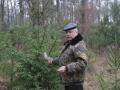 Киевские лесники рассказали о ценах на ели