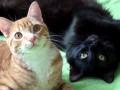 Круче, чем Бритни Спирс: ТОП самых популярных котов в интернете