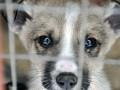 Названы новые штрафы за издевательство над животными
