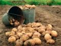 В Киевской области мужчина убил свою жену из-за отказа копать картошку